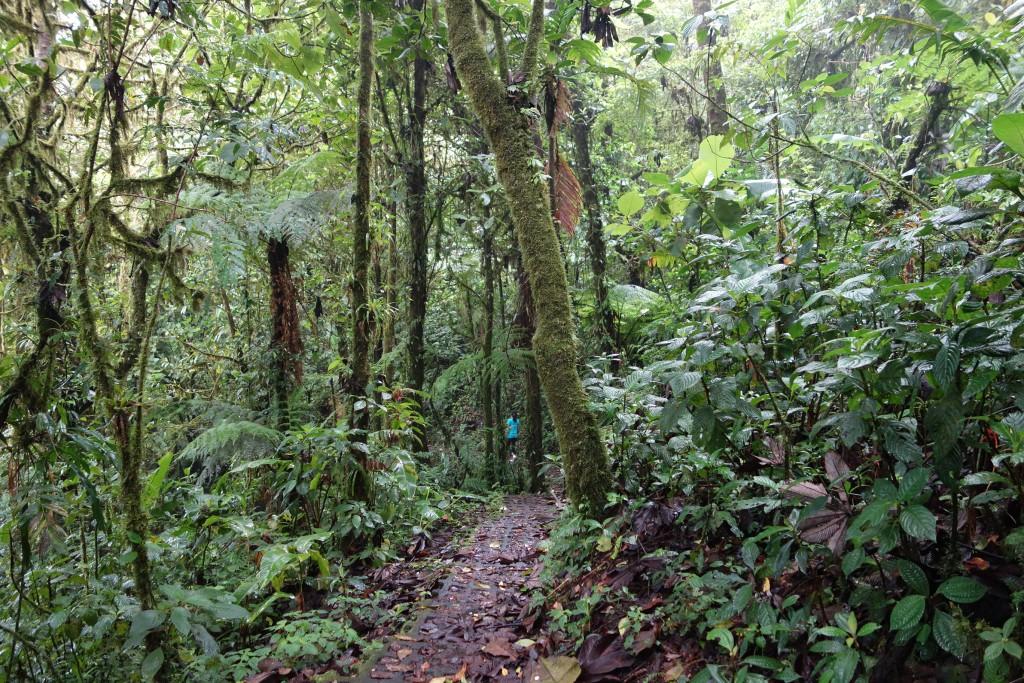 Monteverde Hike